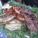 Lake Atitlan Street Food Tour
