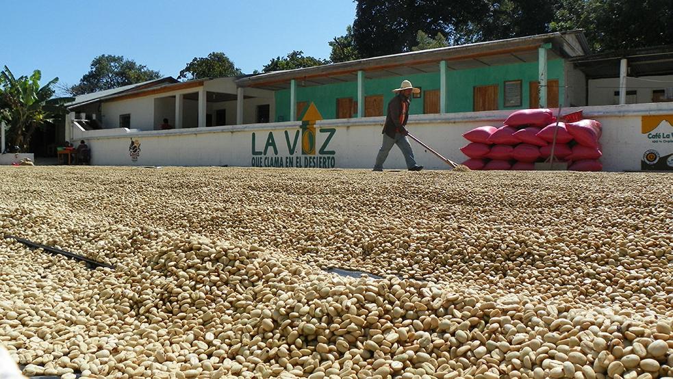 Lake Atitlan Coffee