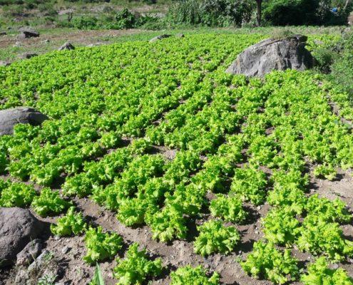 Guatemala Fresh Fruits & Vegetables
