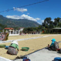 Lake Atitlan Coffee Tour