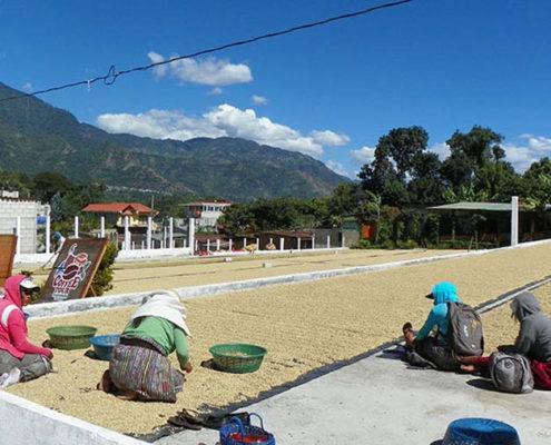 Lake Atitlan Coffee Tour